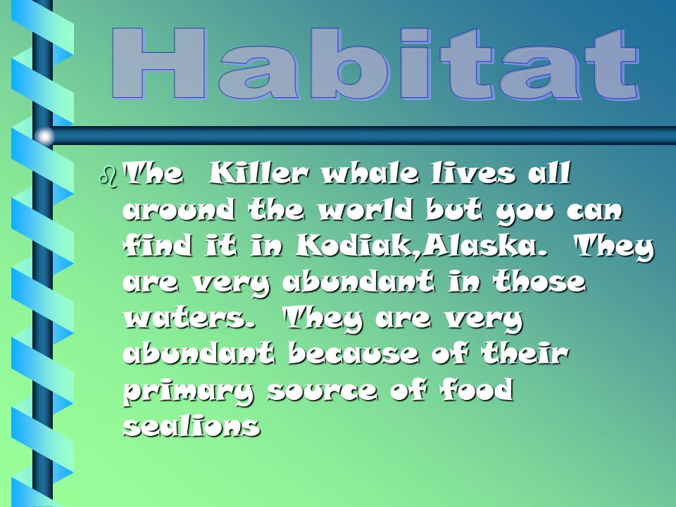 bTbTbTbThe Killer whale lives all around the world but you can find it in Kodiak,Alaska.