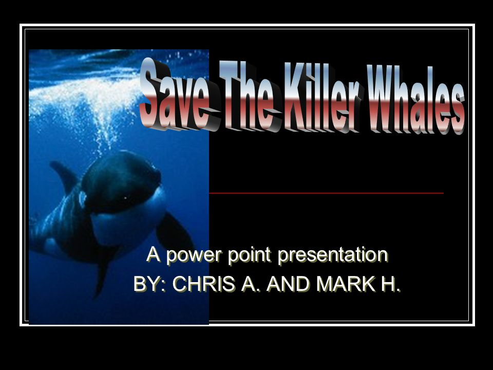 WHY ENDANGERED.People have been killing killer whales since the 12 th century.