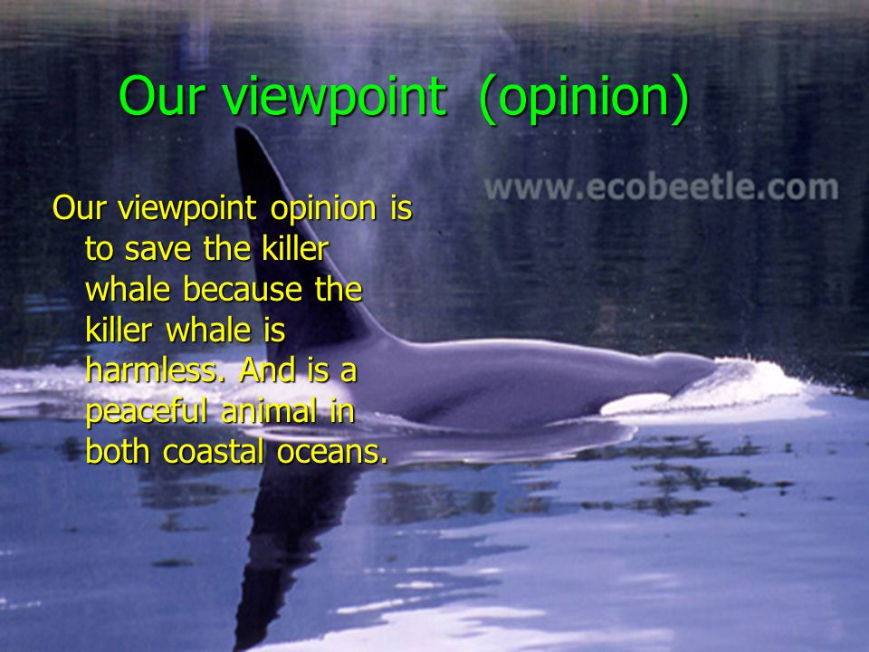 Our viewpoint (opinion) Our viewpoint (opinion) Our viewpoint opinion is to save the killer whale because the killer whale is harmless.