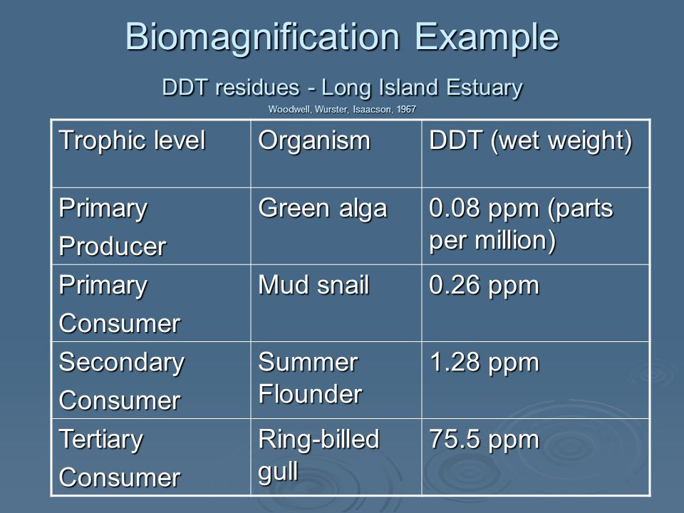 Biomagnification Example DDT residues - Long Island Estuary Woodwell, Wurster, Isaacson, 1967 Trophic level Organism DDT (wet weight) PrimaryProducer Green alga 0.08 ppm (parts per million) PrimaryConsumer Mud snail 0.26 ppm SecondaryConsumer Summer Flounder 1.28 ppm TertiaryConsumer Ring-billed gull 75.5 ppm