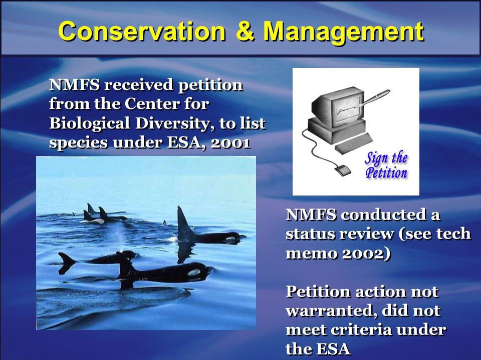 NMFS received petition from the Center for Biological Diversity, to list species under ESA, 2001 NMFS conducted a status review (see tech memo 2002) Petition action not warranted, did not meet criteria under the ESA NMFS conducted a status review (see tech memo 2002) Petition action not warranted, did not meet criteria under the ESA Conservation & Management