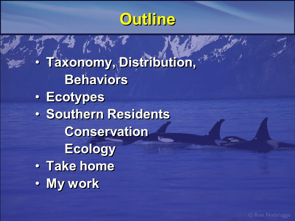 Outline Taxonomy, Distribution, Behaviors Ecotypes Southern Residents Conservation Ecology Take home My work Taxonomy, Distribution, Behaviors Ecotypes Southern Residents Conservation Ecology Take home My work