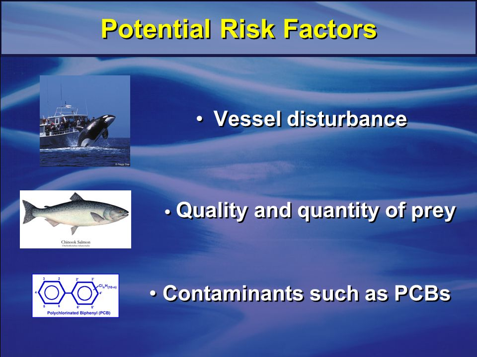 Potential Risk Factors Vessel disturbance Quality and quantity of prey Contaminants such as PCBs
