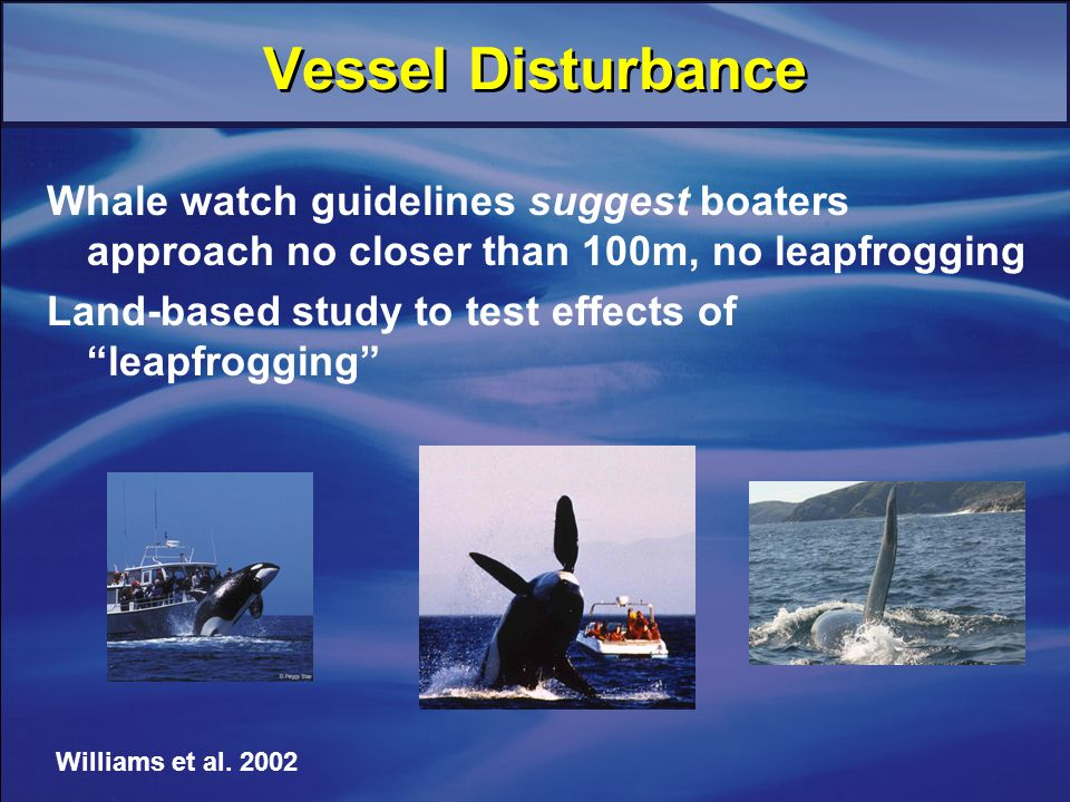 Vessel Disturbance Whale watch guidelines suggest boaters approach no closer than 100m, no leapfrogging Land-based study to test effects of leapfrogging Williams et al.
