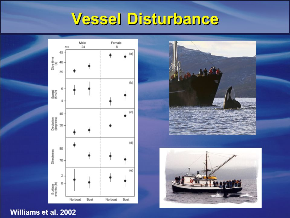 Vessel Disturbance Williams et al. 2002
