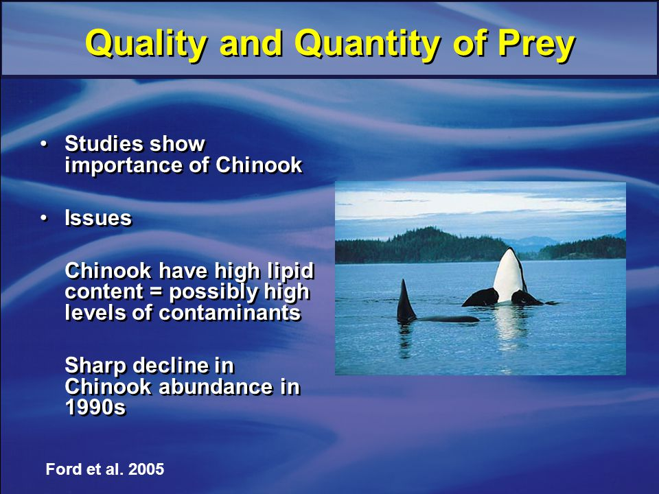 Quality and Quantity of Prey Studies show importance of Chinook Issues Chinook have high lipid content = possibly high levels of contaminants Sharp decline in Chinook abundance in 1990s Studies show importance of Chinook Issues Chinook have high lipid content = possibly high levels of contaminants Sharp decline in Chinook abundance in 1990s Ford et al.