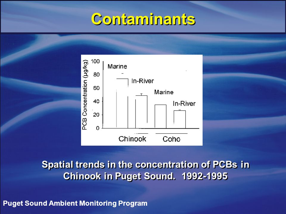 Contaminants Puget Sound Ambient Monitoring Program Spatial trends in the concentration of PCBs in Chinook in Puget Sound.
