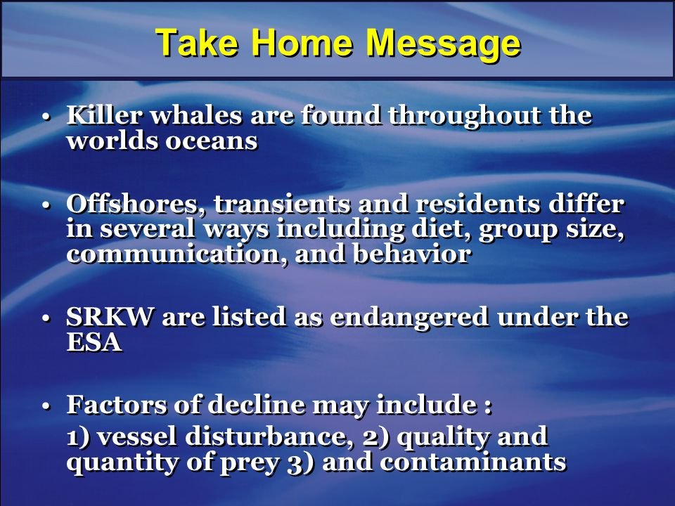 Take Home Message Killer whales are found throughout the worlds oceans Offshores, transients and residents differ in several ways including diet, group size, communication, and behavior SRKW are listed as endangered under the ESA Factors of decline may include : 1) vessel disturbance, 2) quality and quantity of prey 3) and contaminants Killer whales are found throughout the worlds oceans Offshores, transients and residents differ in several ways including diet, group size, communication, and behavior SRKW are listed as endangered under the ESA Factors of decline may include : 1) vessel disturbance, 2) quality and quantity of prey 3) and contaminants
