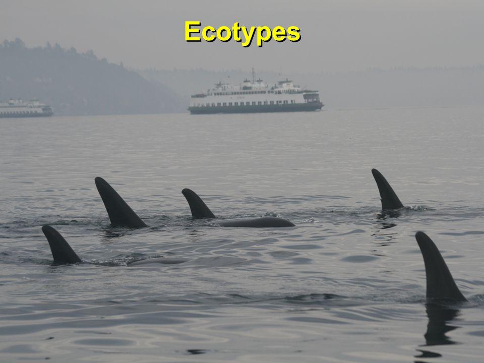 Ecotypes