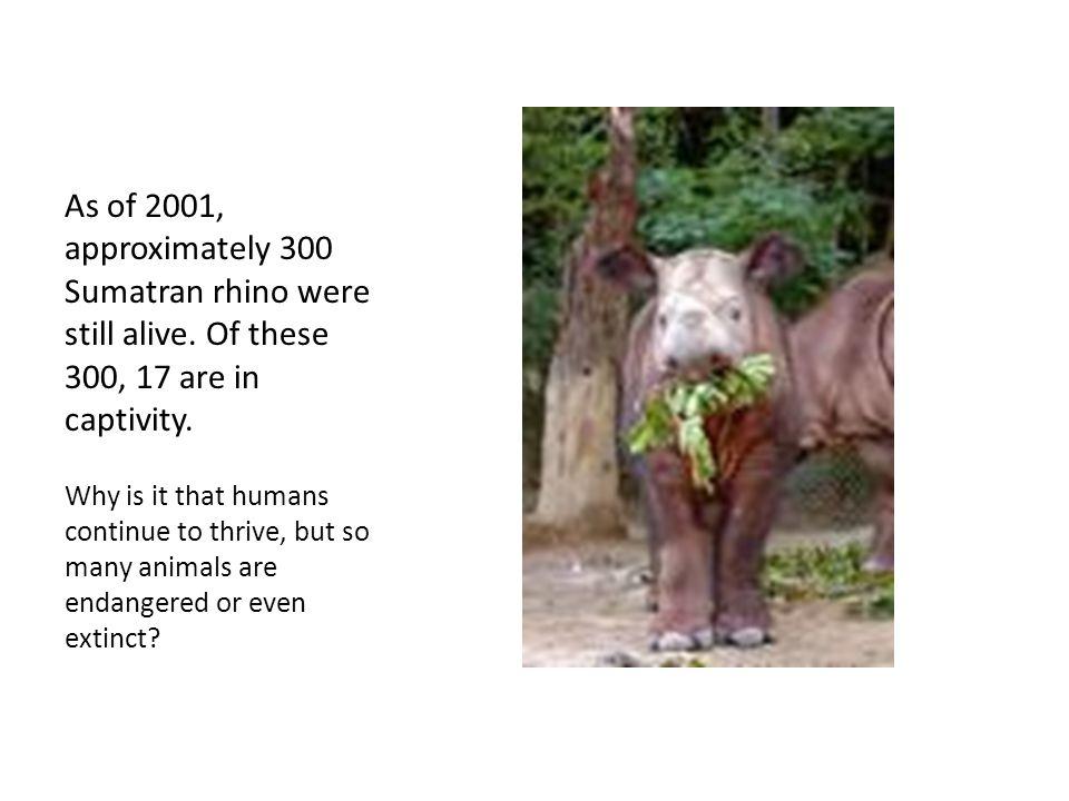 Why should we save the Sumatran Rhinoceros.
