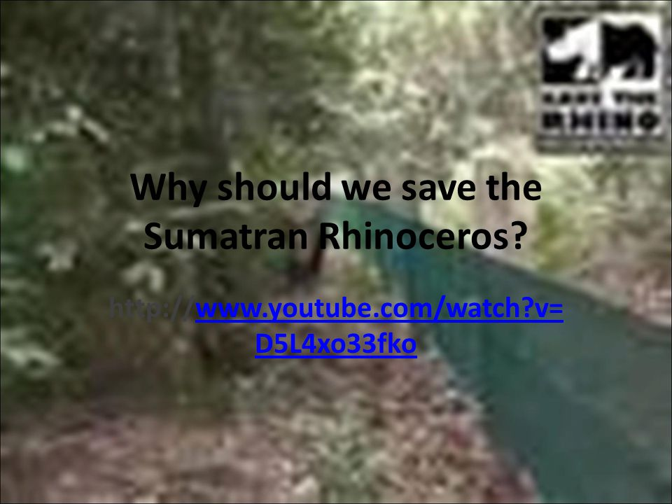 Why should we save the Sumatran Rhinoceros.