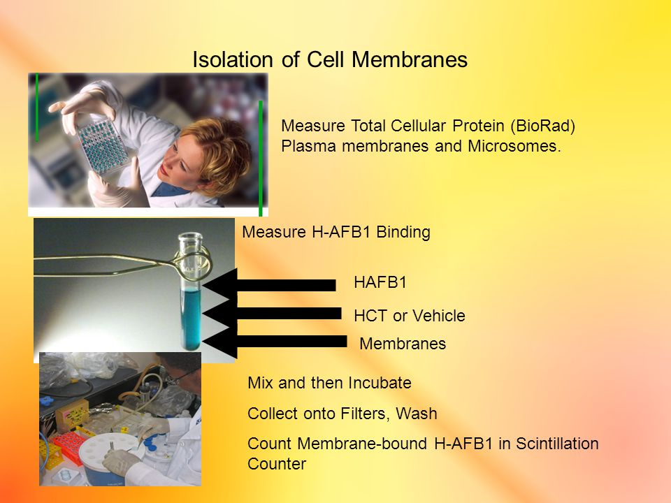 Measure Total Cellular Protein (BioRad) Plasma membranes and Microsomes.