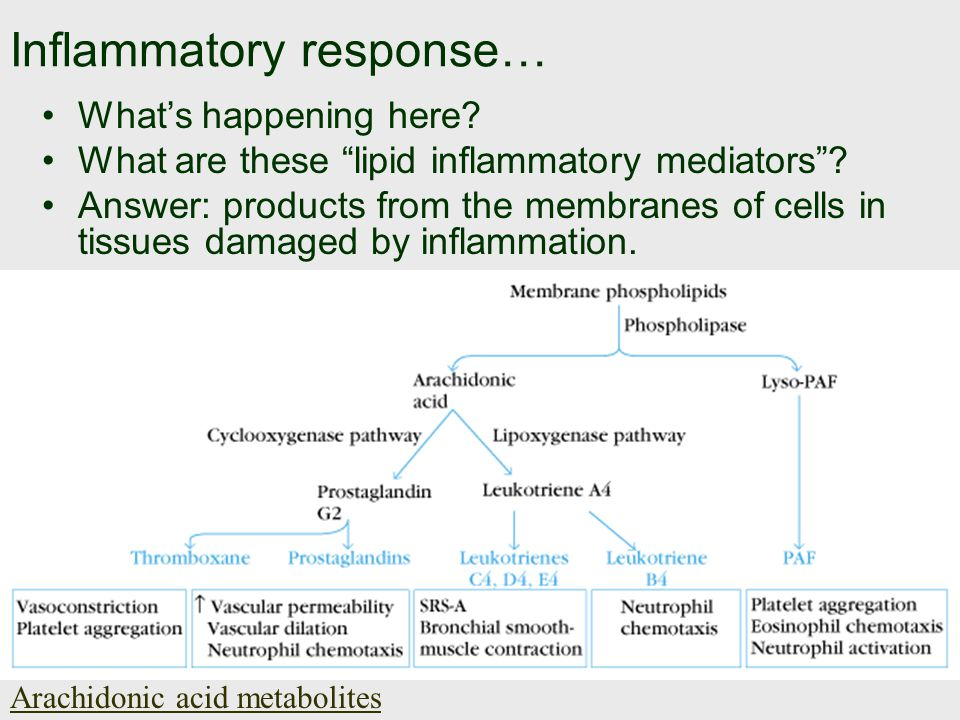 Inflammatory response… What's happening here. What are these lipid inflammatory mediators .