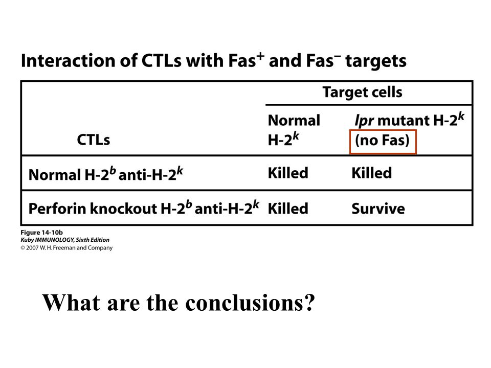 CTLs could kill target cells in two ways: 1.