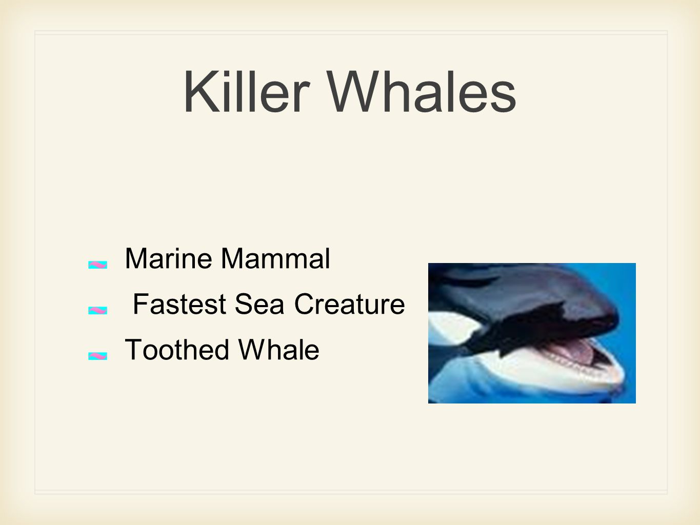Killer Whales Marine Mammal Fastest Sea Creature Toothed Whale