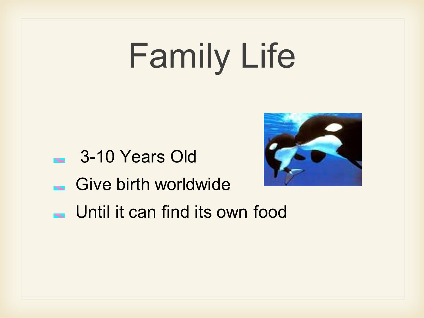 Family Life 3-10 Years Old Give birth worldwide Until it can find its own food