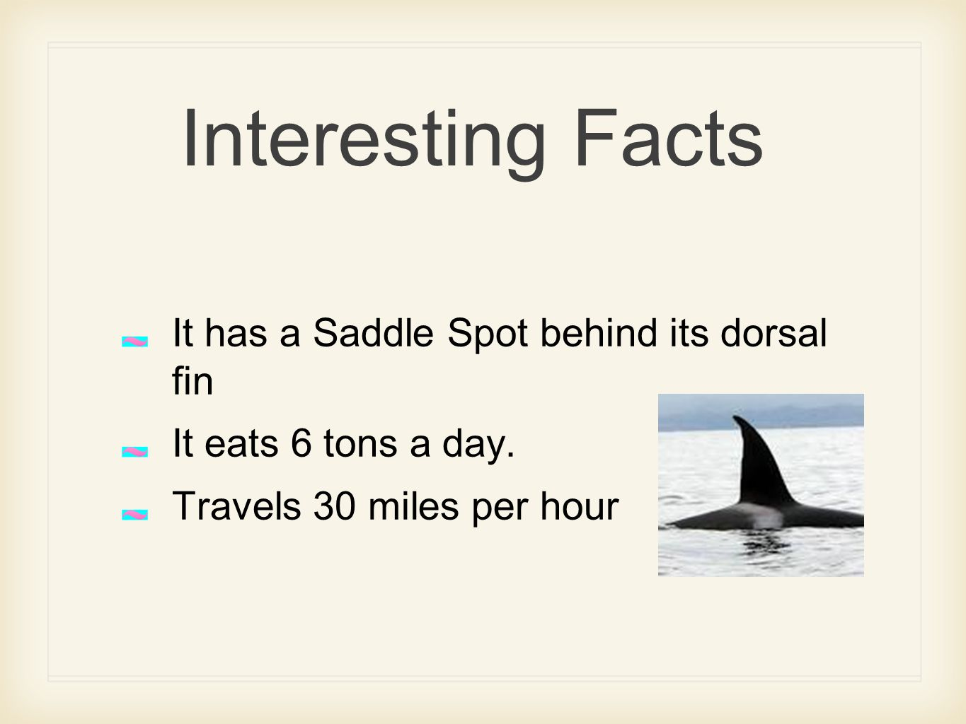 Interesting Facts It has a Saddle Spot behind its dorsal fin It eats 6 tons a day.