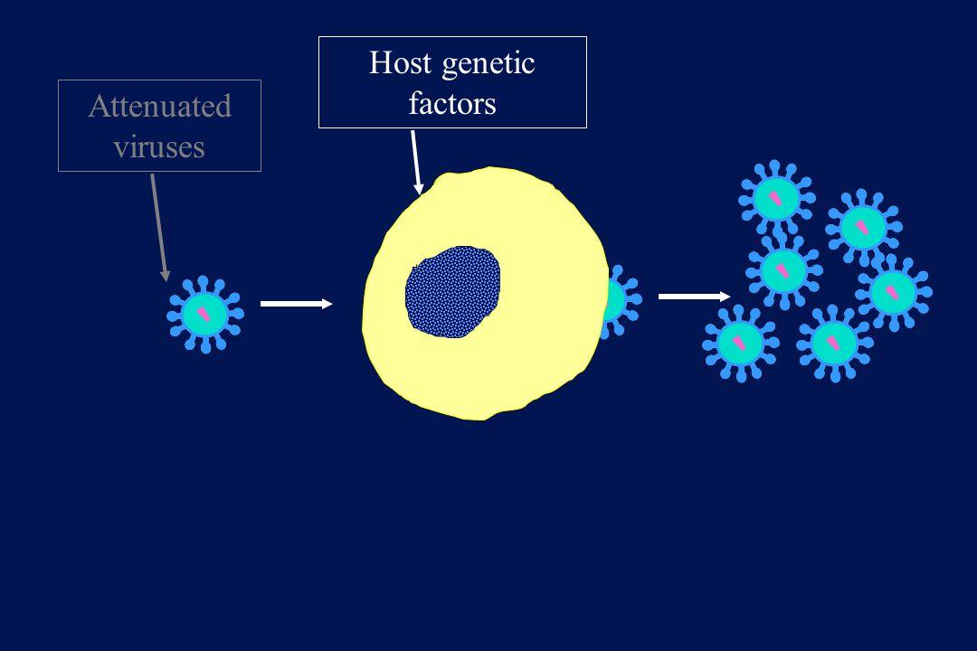 Attenuated viruses Host genetic factors