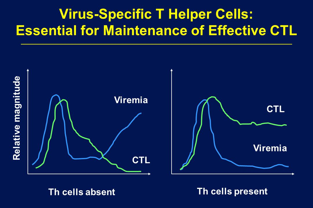 Virus-Specific T Helper Cells: Essential for Maintenance of Effective CTL Th cells absent Th cells present Relative magnitude CTL Viremia CTL