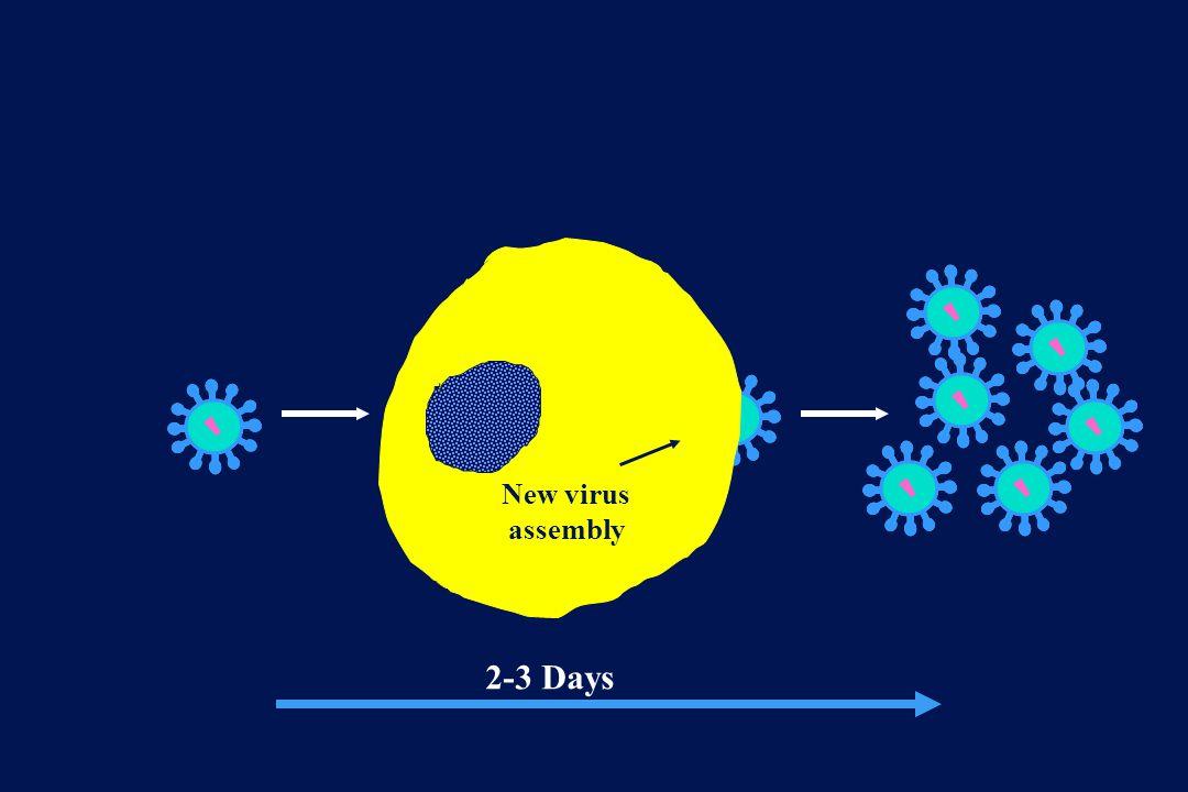 New virus assembly 2-3 Days