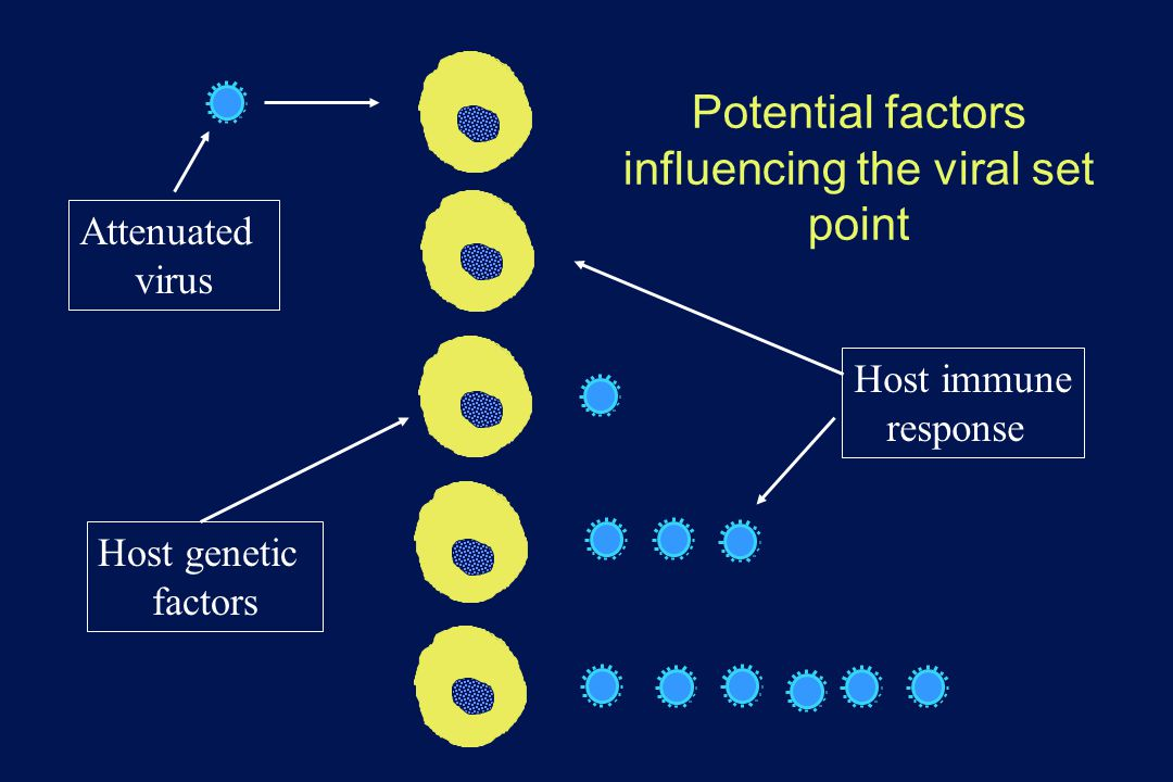 Potential factors influencing the viral set point Attenuated virus Host genetic factors Host immune response