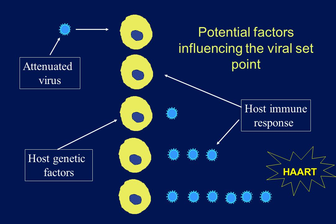 Potential factors influencing the viral set point Attenuated virus Host genetic factors Host immune response HAART
