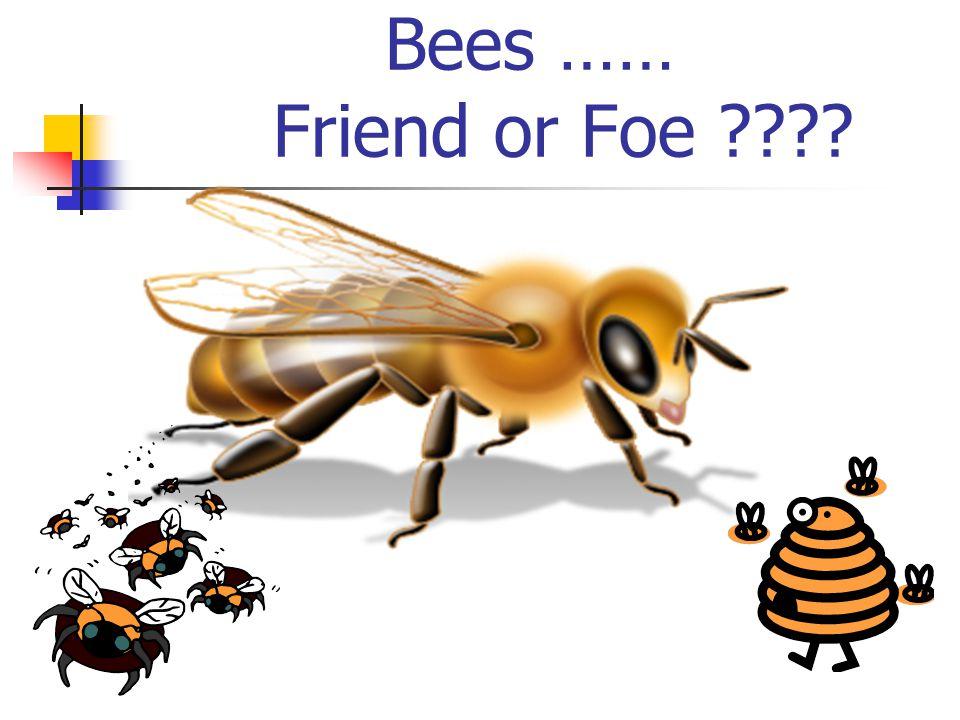 Bees …… Friend or Foe
