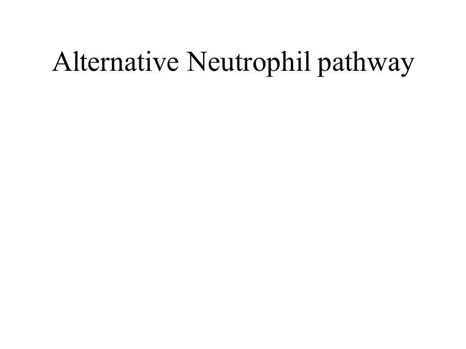 Alternative Neutrophil pathway