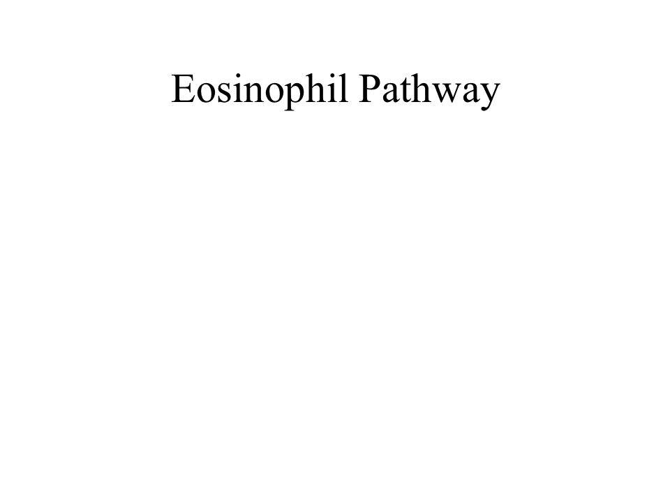 Eosinophil Pathway
