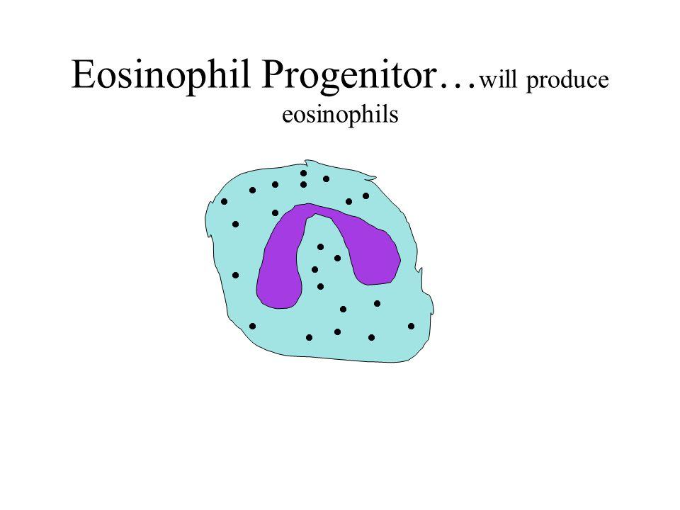 Eosinophil Progenitor… will produce eosinophils