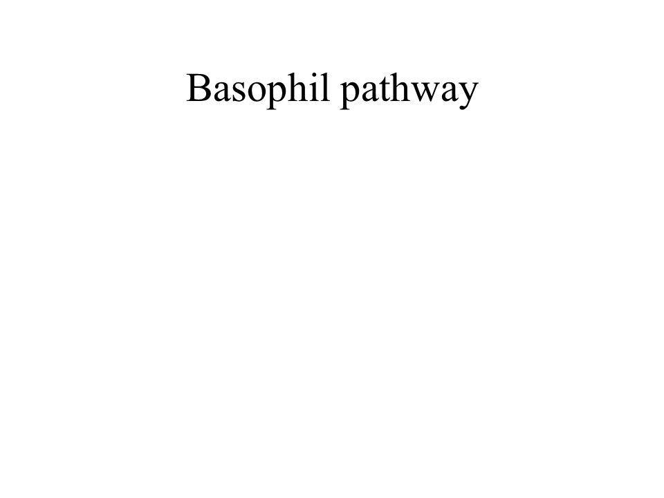 Basophil pathway