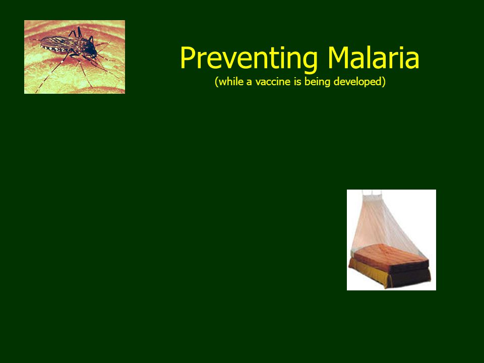 Preventing Malaria (while a vaccine is being developed)