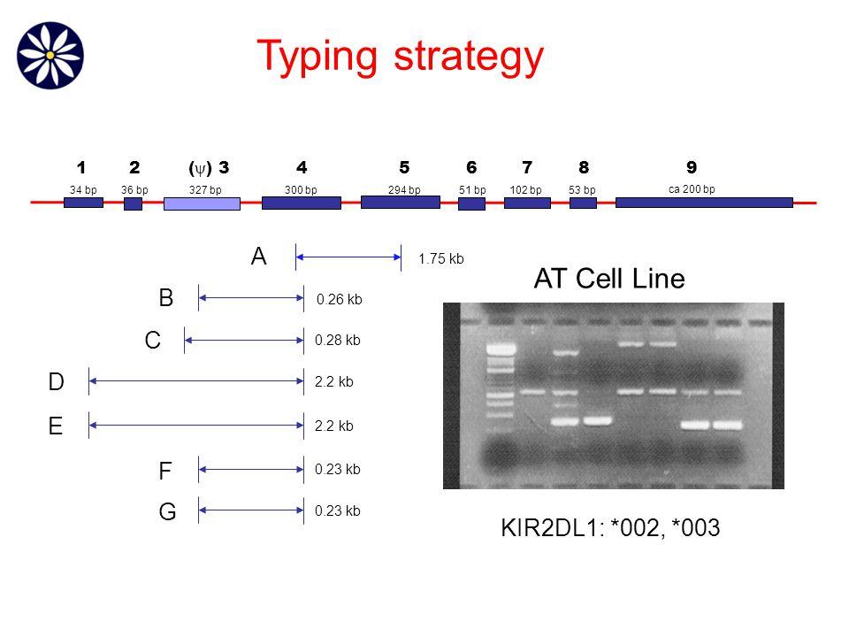 1.75 kb 0.26 kb 0.28 kb 2.2 kb 0.23 kb A B C D E F G KIR2DL1: *002, *003 AT Cell Line Typing strategy 36 bp327 bp300 bp294 bp51 bp 102 bp 53 bp ca 200 bp 34 bp 12 (  ) 3 456789