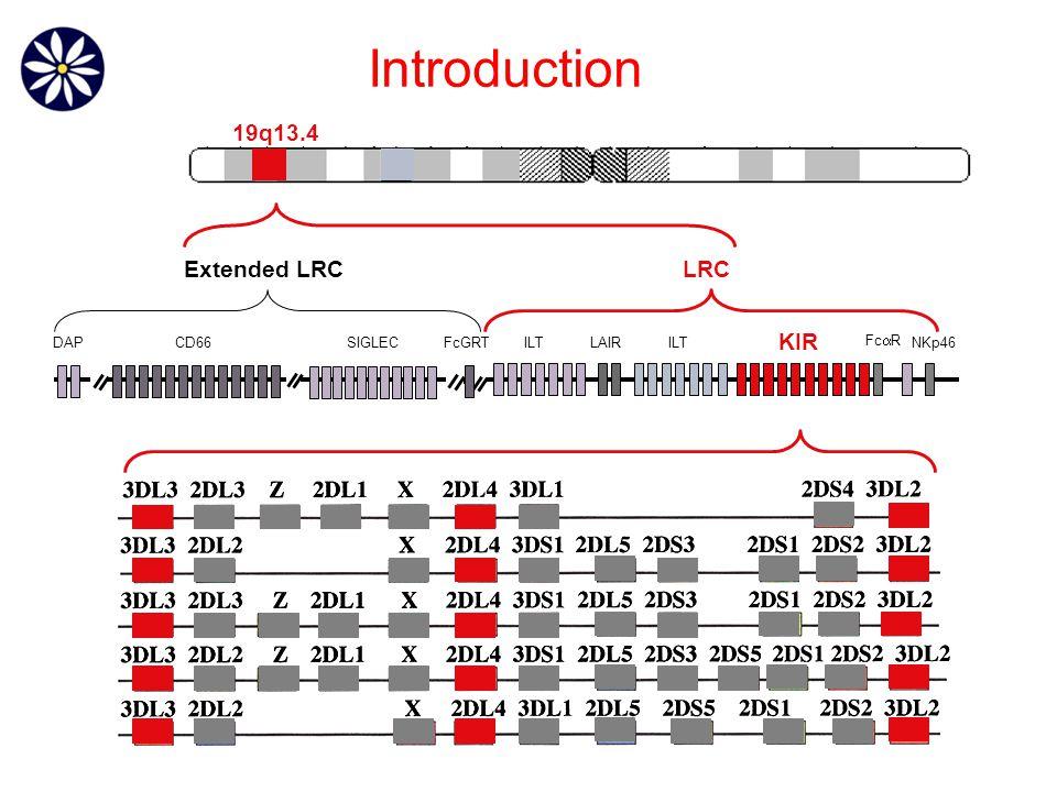 DAPCD66SIGLECLAIRILT KIR Fc  R FcGRTNKp46 19q13.4 LRCExtended LRC Introduction