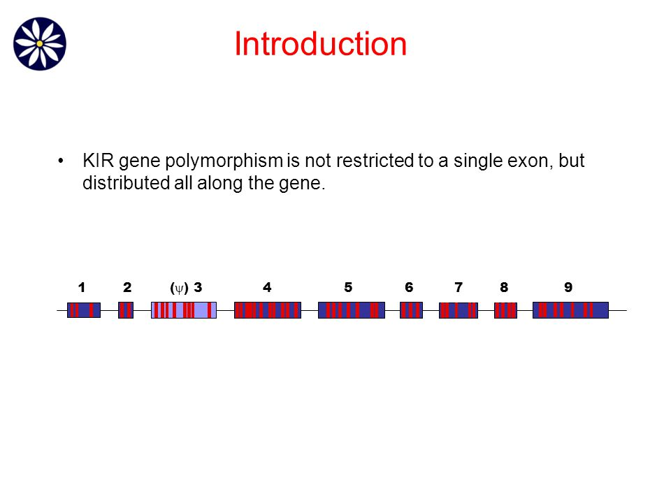 KIR gene polymorphism is not restricted to a single exon, but distributed all along the gene.