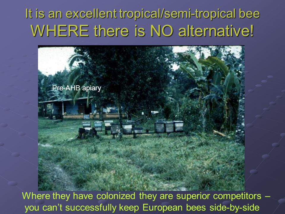 It is an excellent tropical/semi-tropical bee WHERE there is NO alternative! Pre-AHB apiary Where they have colonized they are superior competitors –