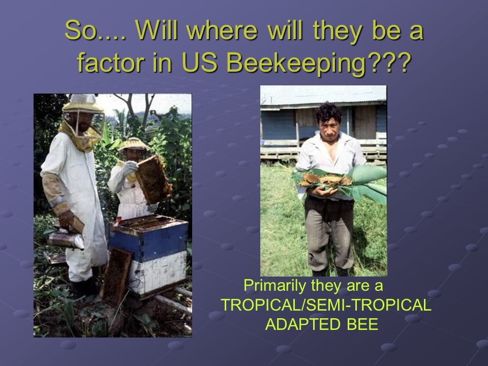 So.... Will where will they be a factor in US Beekeeping??? Primarily they are a TROPICAL/SEMI-TROPICAL ADAPTED BEE