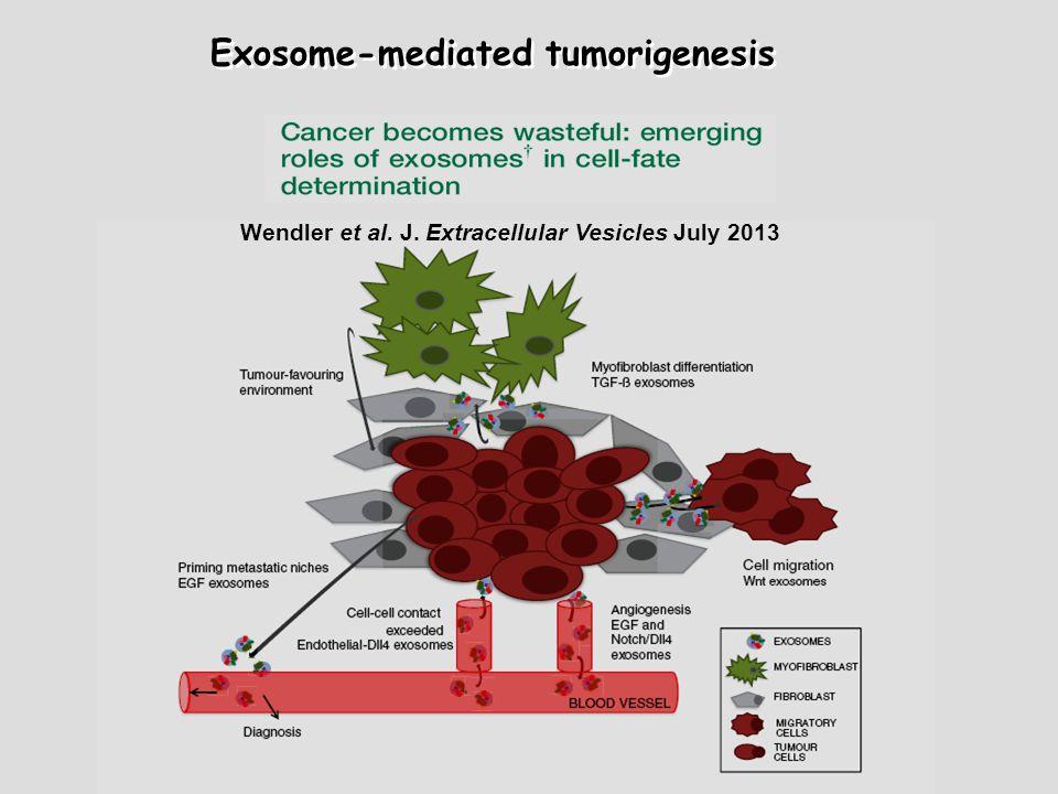 Wendler et al. J. Extracellular Vesicles July 2013 Exosome-mediated tumorigenesis