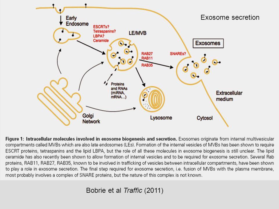 Exosome secretion Bobrie et al Traffic (2011)