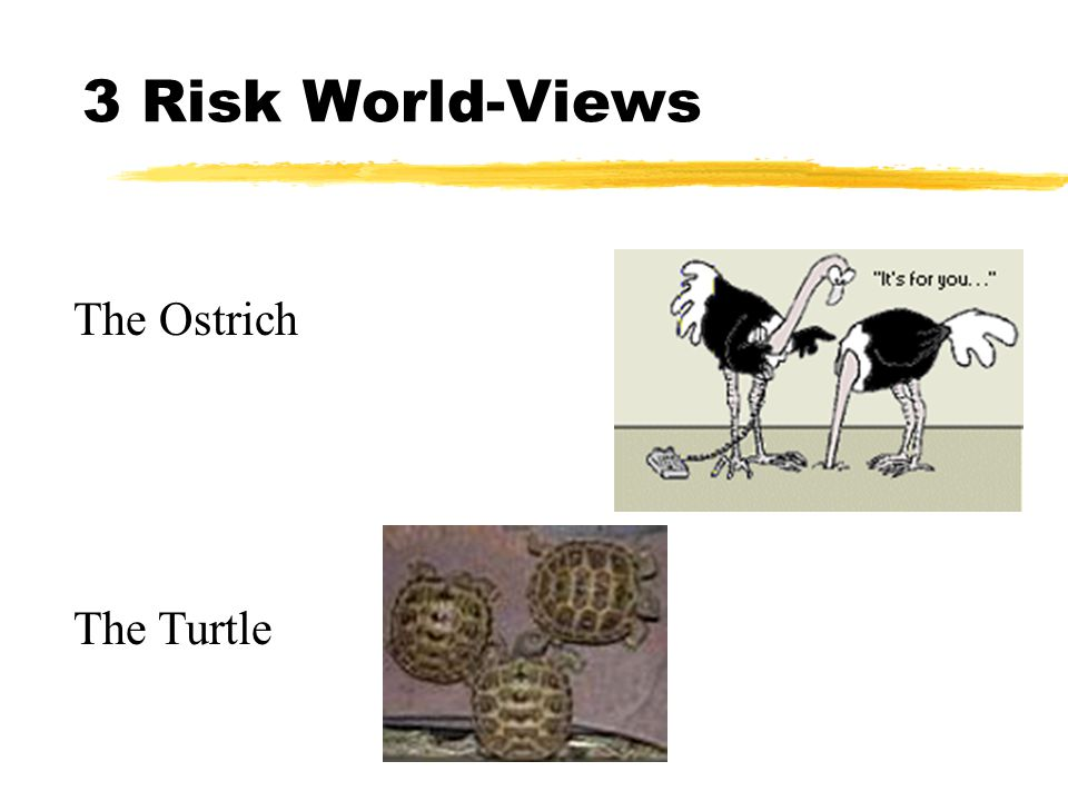 3 Risk World-Views The Ostrich The Turtle
