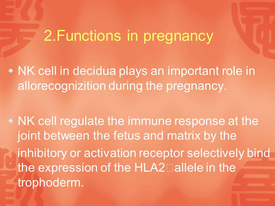 2.Functions in pregnancy  NK cell in decidua plays an important role in allorecognizition during the pregnancy.