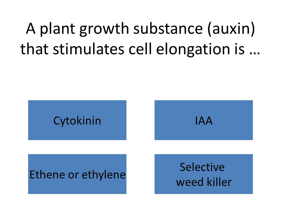 A plant growth substance (auxin) that stimulates cell elongation is … CytokininIAA Ethene or ethylene Selective weed killer