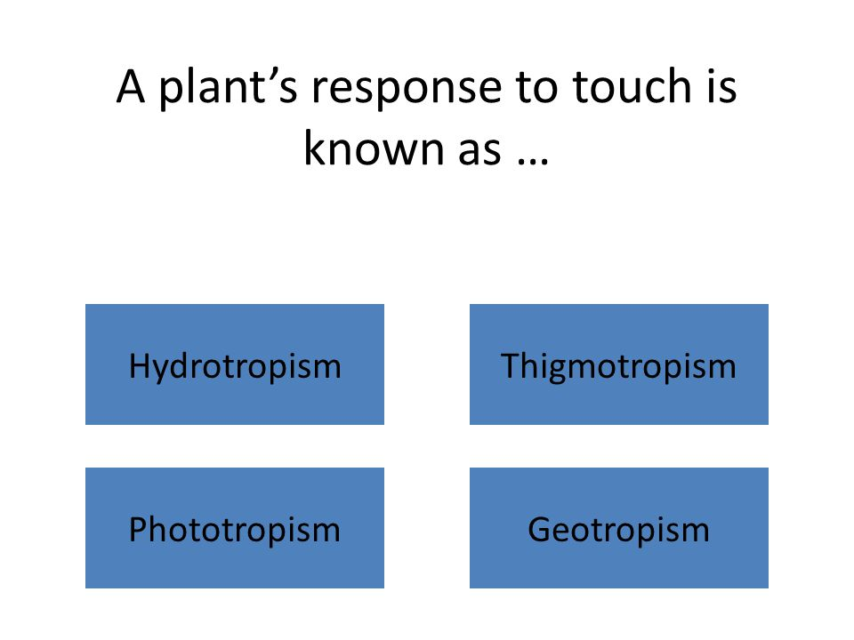 A plant's response to touch is known as … HydrotropismThigmotropism PhototropismGeotropism