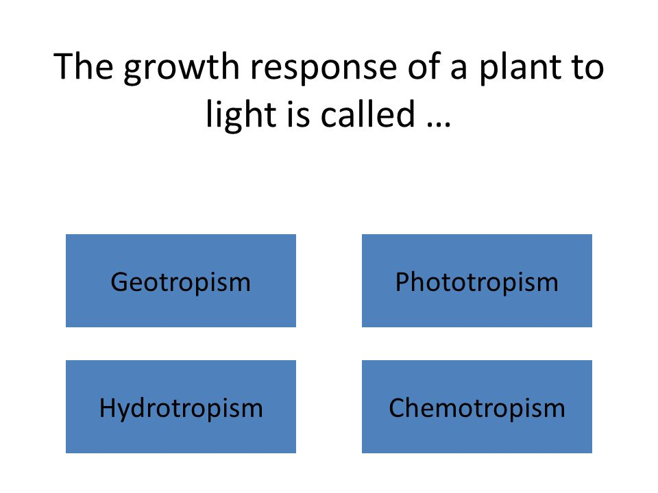 The growth response of a plant to light is called … GeotropismPhototropism HydrotropismChemotropism