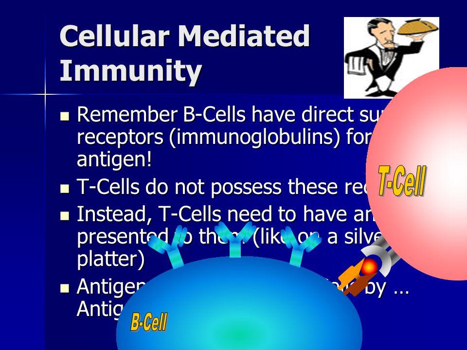 Remember B-Cells have direct surface receptors (immunoglobulins) for antigen! Remember B-Cells have direct surface receptors (immunoglobulins) for ant