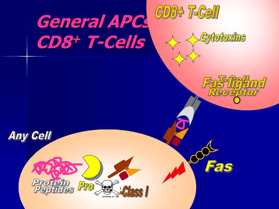 General APCs & CD8 + T-Cells