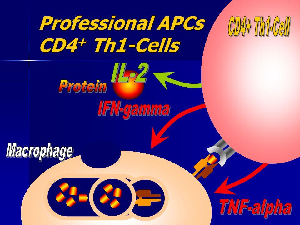 Professional APCs CD4 + Th1-Cells