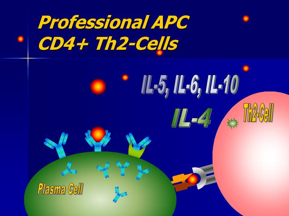 Professional APC CD4+ Th2-Cells