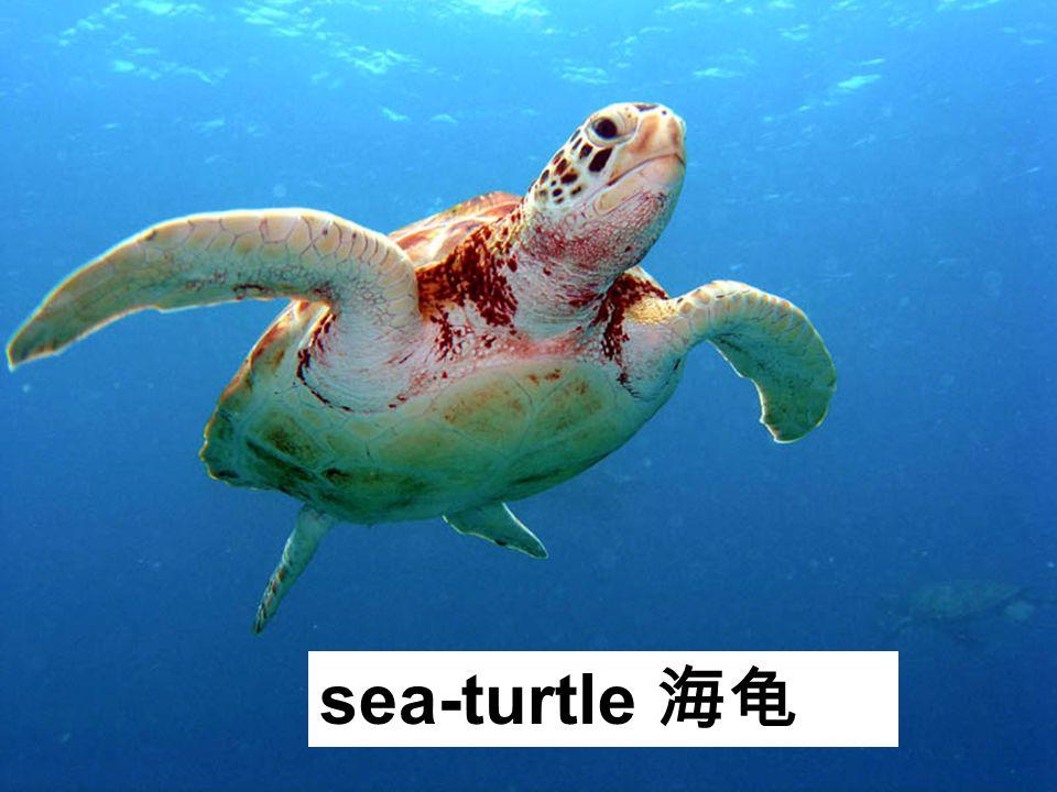 sea-turtle 海龟