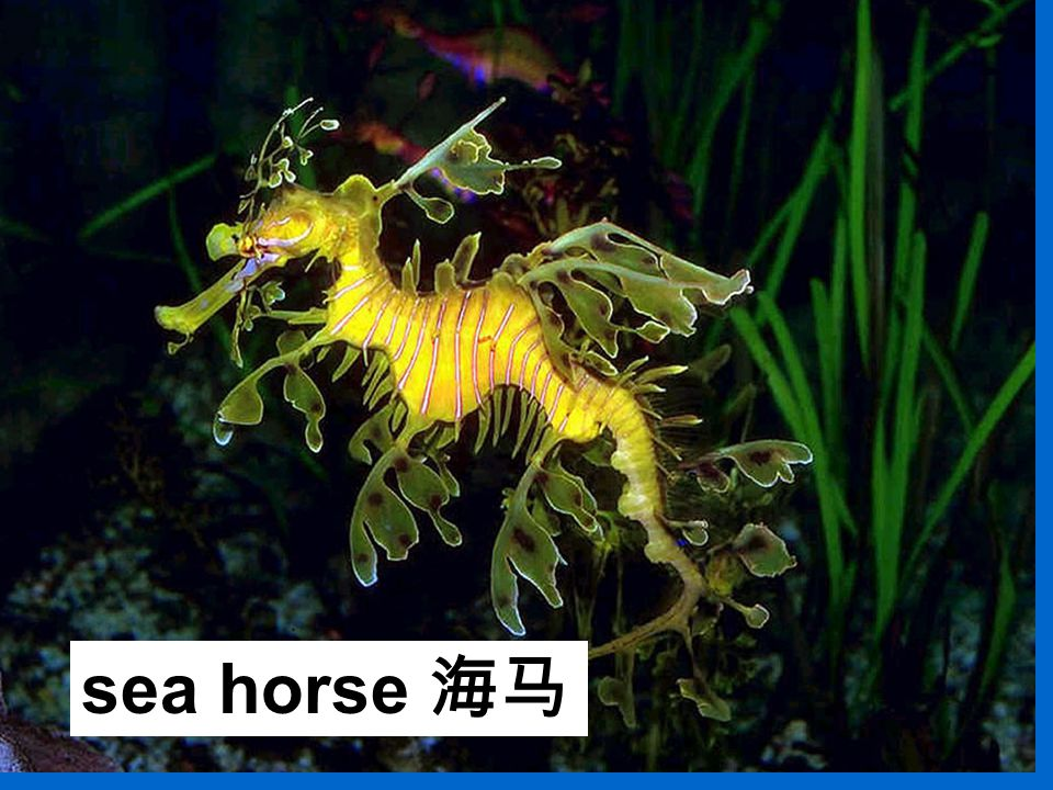 sea horse 海马